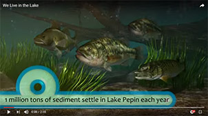 Screenshot from Lake Pepin promotional video with a group of fish under water with a branch in the background and vegetation.