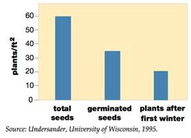 Bar chart showing alfalfa a linear drop in total amount of alfalfa plants per acre from total seeds, germinated seeds, and plants after forst winter