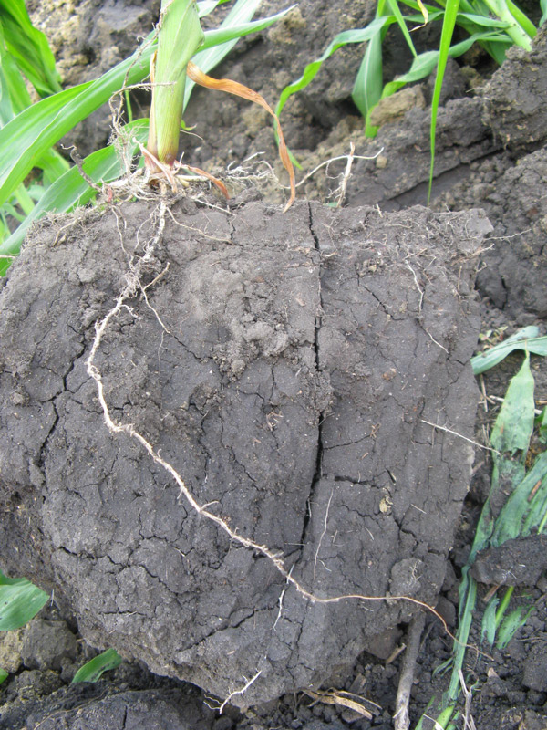 side view of soil that is solid and compacted