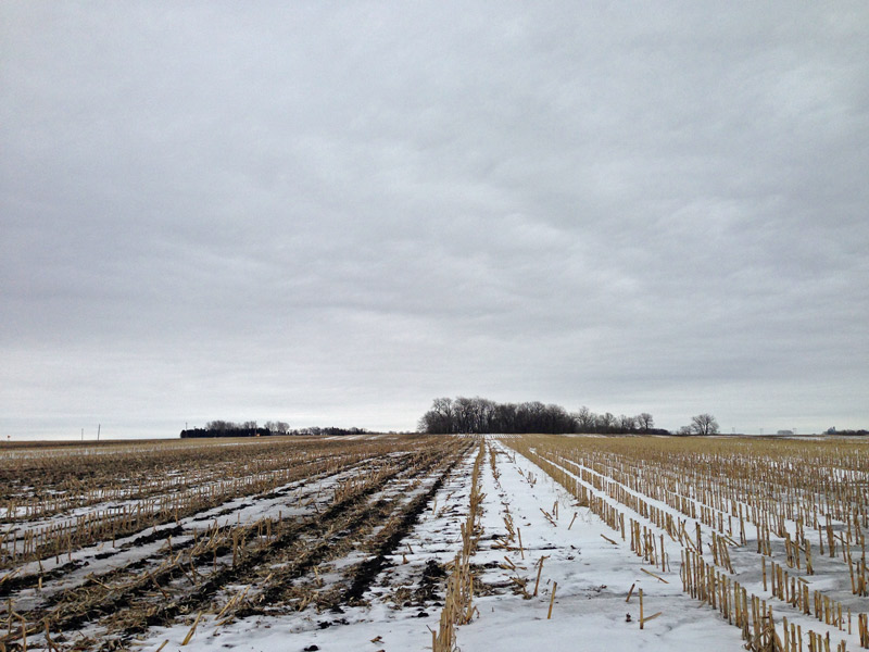 snow covered field with crop residue.