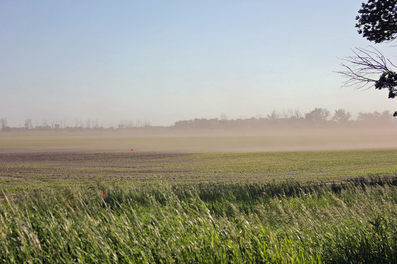 open field with young plants and wind blowing dust and soil .