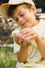 Child holding baby chick.
