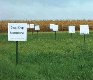 Cover crop research plot