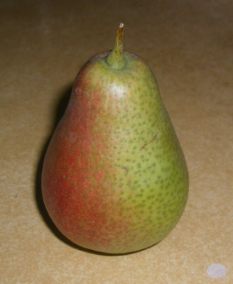 Red and green colored ripe Patten pear sitting on a surface