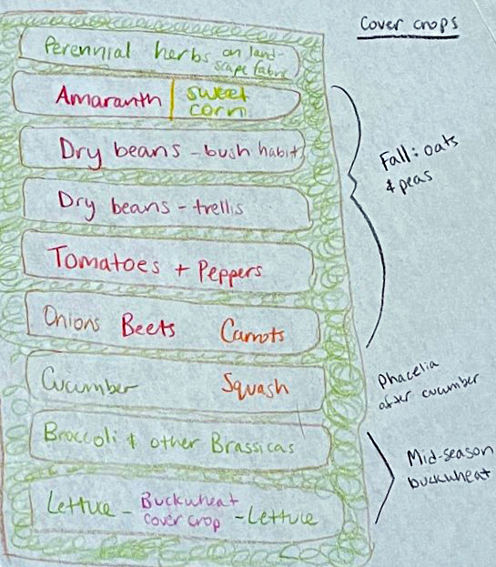 A hand-drawn garden plan with 9 beds labeled: Perennial herbs on landscape fabric, Amaranth / Sweet corn, Dry beans bush habit, Dry beans trellis, Tomatoes & Peppers, Onions, Beets, & Carrots, Cucumber & Squash, Broccoli & Other Brassicas, Lettuce - Buckwheat cover crop - Lettuce. Cover crops are written on the sides of the beds. The top beds are labeled Fall: oats & peas, the cucumber bed is labeled Phacelia, and the bottom beds are labeled Midseason buckwheat.