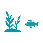 Icon of fish and lake plants