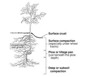 side view diagram of a plant, line for ground level then root base in soil, along with descriptions of levels of compaction.