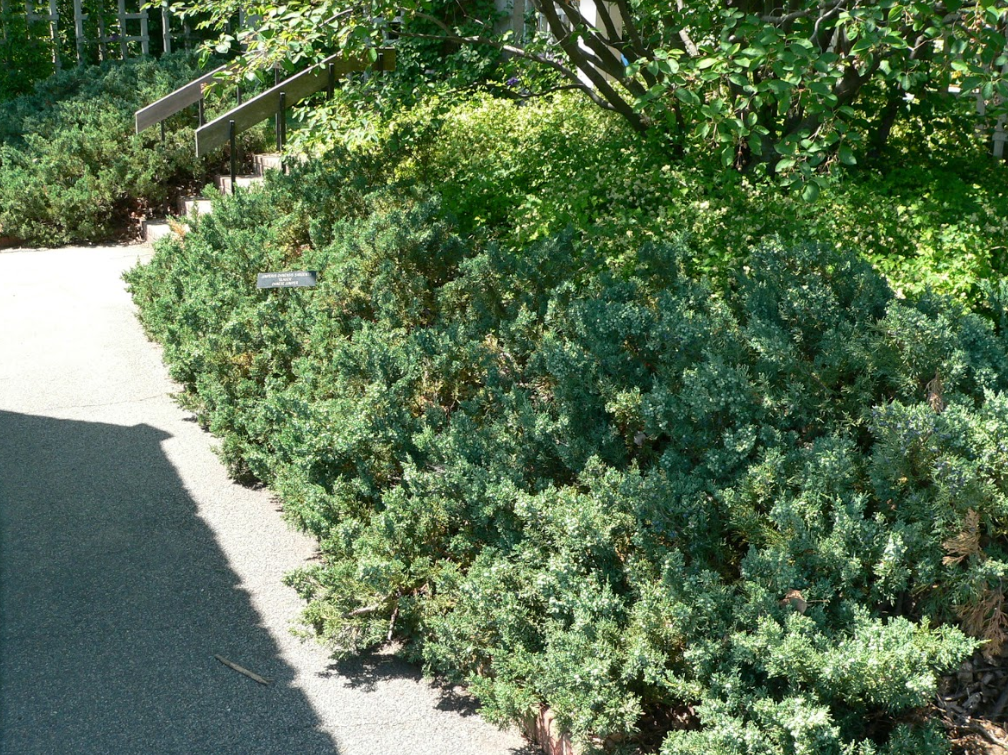 Choosing Evergreens For Your Landscape Umn Extension