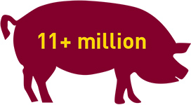"pig icon with text ""11+ million"""