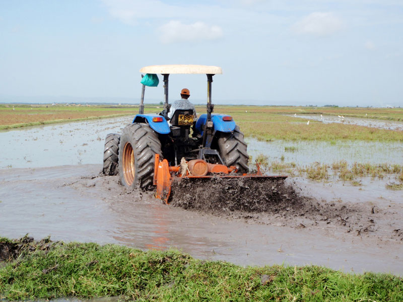 person driving a tractor through water in a rice field.