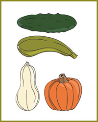 Illustration of vegetables in the squash family.