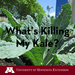 "Kale plant with text ""What's Killing My Kale"" overlaid."