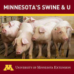 Icon for Minnesota's Swine and U podcast includes 5 pigs together in a barn.