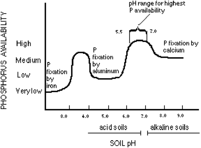 chart showing when phosphorus becomes avaialble in the soil at various pHs