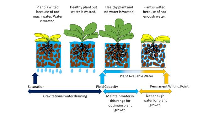 soil water and plant relationships