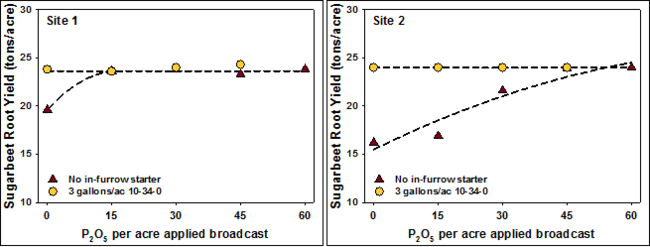 Two graphs showing sugarbeet yield response to P in low and medium soil test P.