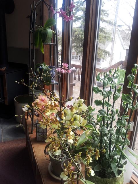 How Much Light Do Houseplants Need Umn Extension
