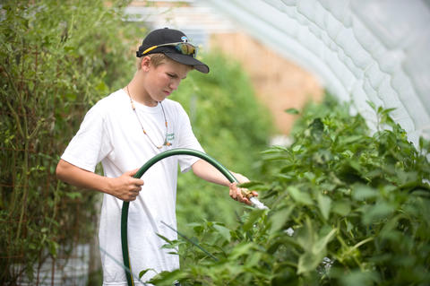 Boy watering tomatoes in greenhouse