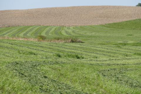 Field of alfalfa crop