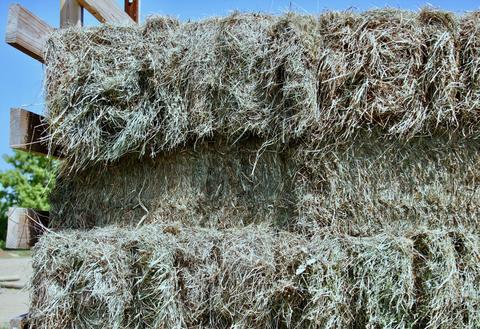 Ten ways to stretch your horse's hay supply | UMN Extension