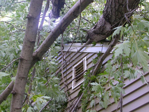 Fallen tree branches from a storm on roof of house