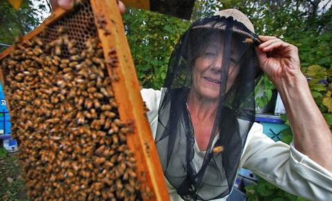 Marla Spivak in protective beekeeper veil and with honeybees on a frame