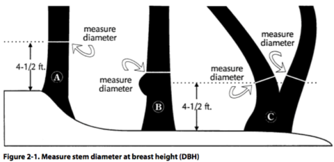 Diagram of how to measure a tree's diameter at breast height