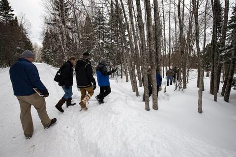 Adults walking into a snow covered forest.