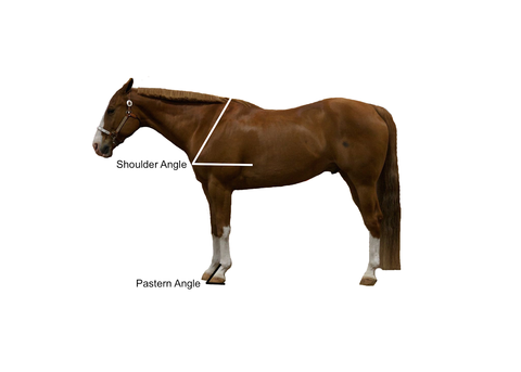 Shoulder angle and pastern angle indicated on horse.