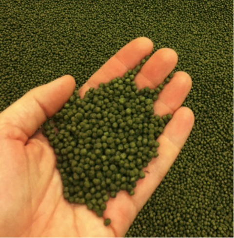 Green alfalfa pellets held out in a hand
