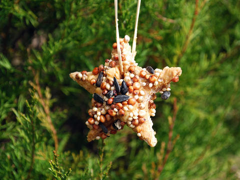 An ornament made of birdseed hangs on a tree