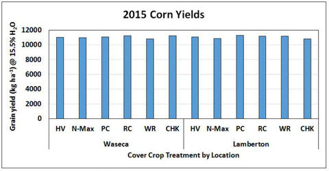 bar chart showing similar corn yields across locations and type of cover crop