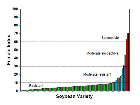 Female indices of soybean varieties