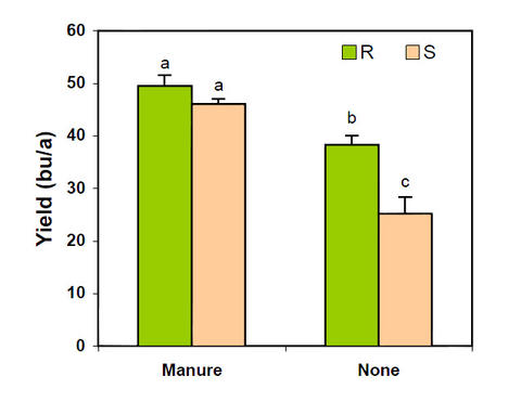 graph of manure use with SCN management