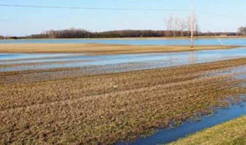 dormant alfalfa field with standing water