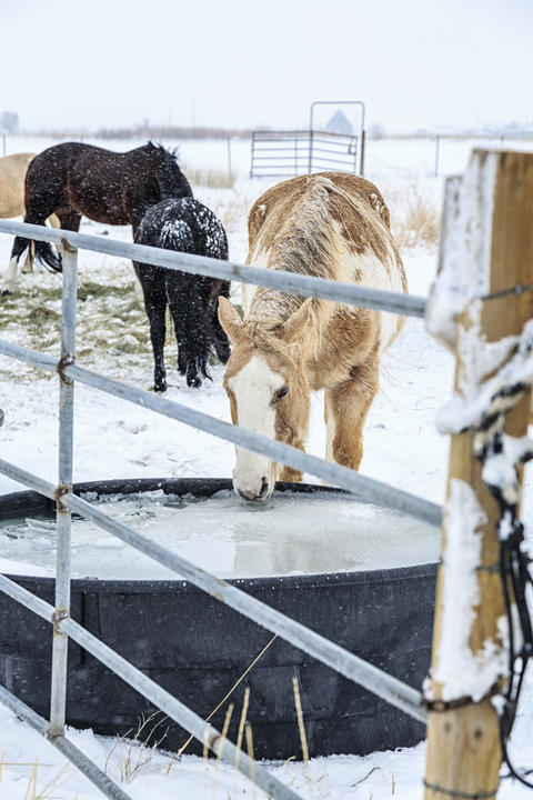 Caring for your horse in the winter | UMN Extension