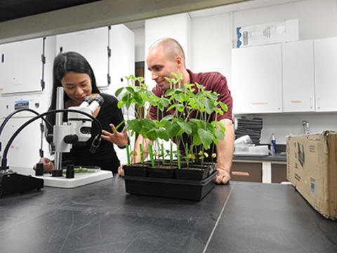 Two people in lab with plants and microscope