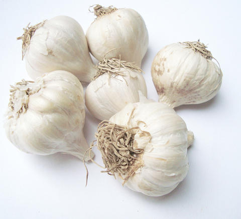 White harvested garlic bulbs