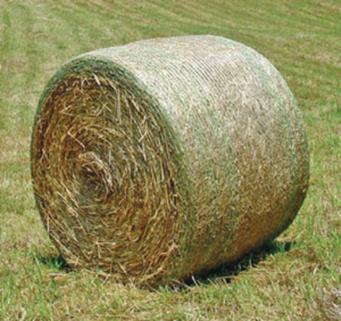 Net wrapped round bale