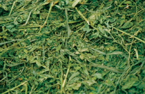 Alfalfa-grass hay mix