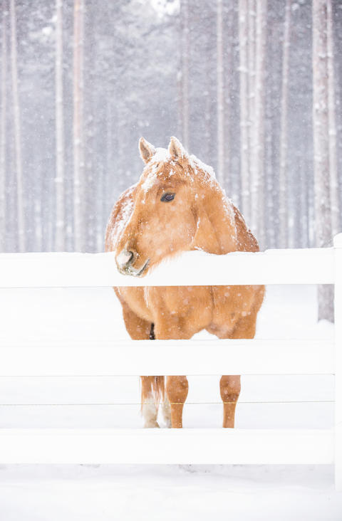 Horse standing at fence in the snow