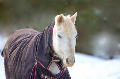 Horse wearing a winter blanket