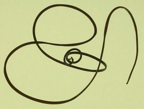 A long, lack, slender worm can be seen intertwined