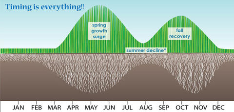 illustration of progress of grass growing through each month of the year with green lines at rising and falling heights on the top of the image and white roots on a brown background at varying depths to show root development through the year