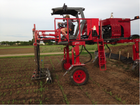 Man driving large, red, farm machine down rows of corn seedlings