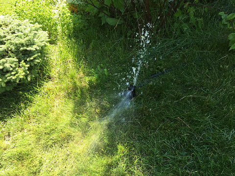 A lawn with an irrigation system that has a broken sprinkler head leaking water.