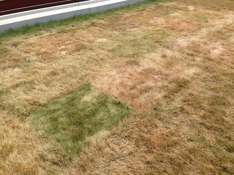 Lawn that has become mostly brown due to lack of water.
