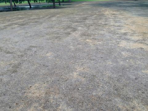 An expanse of dead turf in a park.