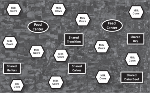 Chart of shapes with text in them showing where feed centers, shared transition, shared heifers, shared calves, shared dairy beef and shared dry cows would be interspersed among milk cows.