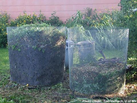 Two wire compost bins side by side filled with grass clippings and other organic matter.